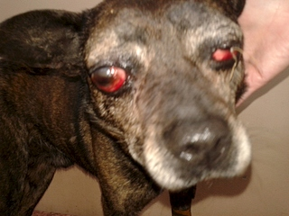 1920 X 1440 925.5 Kb 1920 X 1440 894.5 Kb Боря, 17 лет - сбитая собака, Авангардная, скорее всего не будет видеть