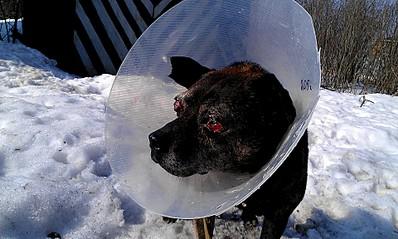 1920 X 1149 604.0 Kb Боря, 17 лет - сбитая собака, Авангардная, скорее всего не будет видеть