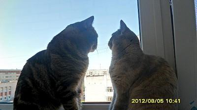 1920 X 1080 438.4 Kb 1920 X 1080 431.5 Kb Питомник британских кошек Cherry Berry's