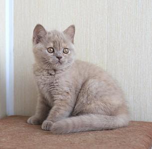 1920 X 1887 580.4 Kb Питомник британских кошек Cherry Berry's