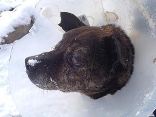 1064 X 798  63.3 Kb Боря, 17 лет - сбитая собака, Авангардная, скорее всего не будет видеть