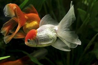 1920 X 1280 481.8 Kb только рыбы