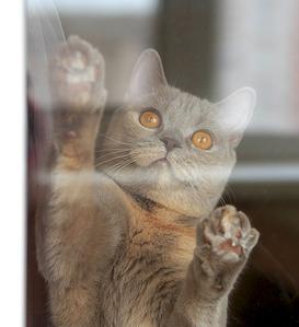 1920 X 2103 622.6 Kb 1920 X 2217 695.9 Kb 1920 X 2339 475.4 Kb Питомник британских кошек Cherry Berry's