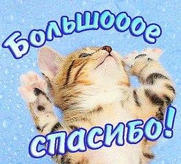 480 X 437 64.7 Kb Сбор средств на обследование Даниила Шигапова (11 мес.)