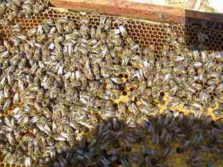 1408 X 1056 129.8 Kb Пчеловодство
