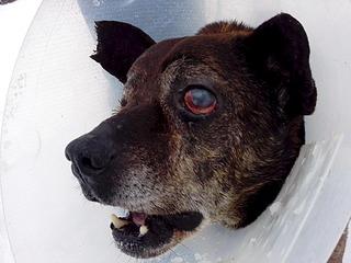 1920 X 1440 559.8 Kb Боря, 17 лет - сбитая собака, Авангардная, скорее всего не будет видеть