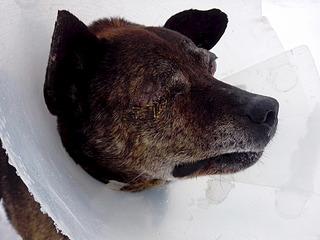 1920 X 1440 551.3 Kb Боря, 17 лет - сбитая собака, Авангардная, скорее всего не будет видеть