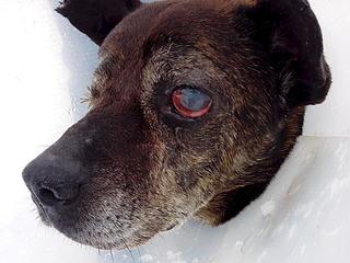 1920 X 1440 713.6 Kb Боря, 17 лет - сбитая собака, Авангардная, скорее всего не будет видеть