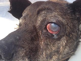 1632 X 1224 893.5 Kb Боря, 17 лет - сбитая собака, Авангардная, скорее всего не будет видеть