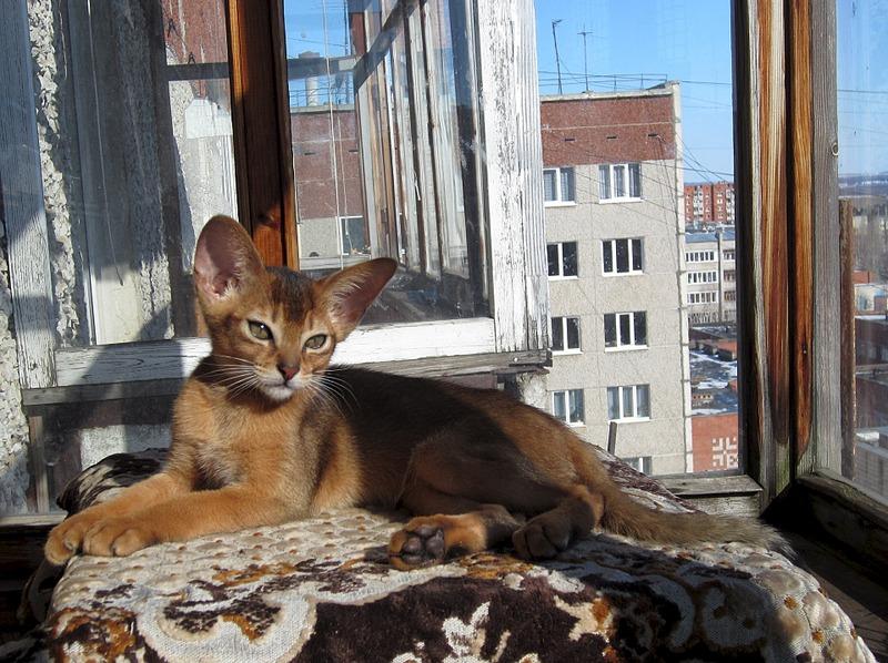 1920 X 1436 737.4 Kb Веточка для Коржиков. У нас родились абиссинские котята и щенки пемброка