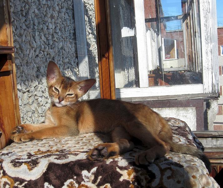 1920 X 1615 812.6 Kb 1920 X 1436 737.4 Kb Веточка для Коржиков. У нас родились абиссинские котята и щенки пемброка
