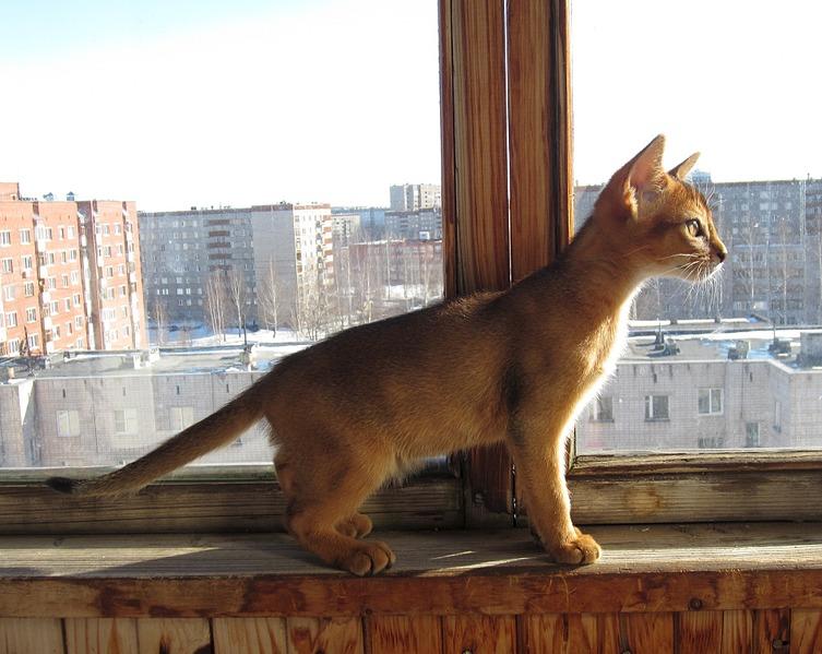 1920 X 1528 543.3 Kb Веточка для Коржиков. У нас родились абиссинские котята и щенки пемброка