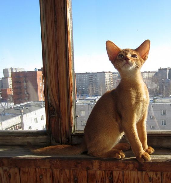 1920 X 2045 738.4 Kb 1920 X 1528 543.3 Kb Веточка для Коржиков. У нас родились абиссинские котята и щенки пемброка
