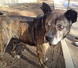 1280 X 1112 712.2 Kb Боря, 17 лет - сбитая собака, Авангардная, скорее всего не будет видеть