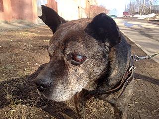 1632 X 1224 836.1 Kb 1280 X 1112 712.2 Kb Боря, 17 лет - сбитая собака, Авангардная, скорее всего не будет видеть
