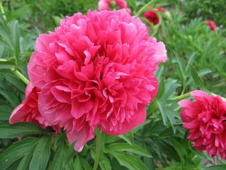 1600 X 1200 223.1 Kb 1600 X 1200 263.9 Kb 1600 X 1200 214.9 Kb 1600 X 1200 166.8 Kb Продам саженцы красивых многолетних цветов от 50 руб