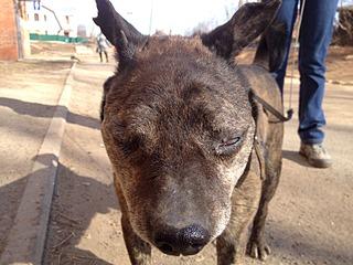 1632 X 1224 701.3 Kb Боря, 17 лет - сбитая собака, Авангардная, скорее всего не будет видеть
