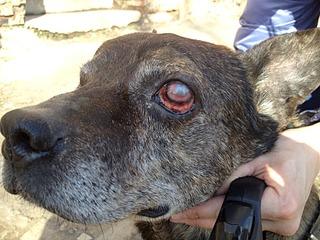 1632 X 1224 748.8 Kb 1632 X 1224 701.3 Kb Боря, 17 лет - сбитая собака, Авангардная, скорее всего не будет видеть