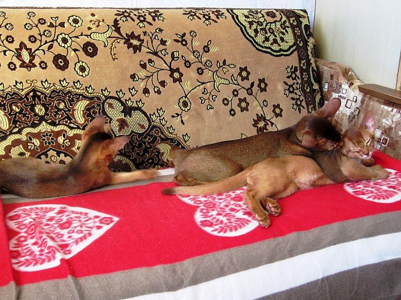 1920 X 1434 773.1 Kb 1920 X 1395 760.8 Kb Веточка для Коржиков. У нас родились абиссинские котята и щенки пемброка