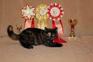 519 X 346 72.7 Kb 519 X 346 73.9 Kb 519 X 346 85.5 Kb 519 X 346 48.3 Kb Британцы Ричард - Чемпион Мира WCF и Лекси Международный чемпион. У нас есть котятки.