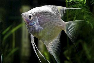 800 X 535  50.4 Kb только рыбы