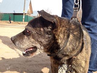 1101 X 826 129.9 Kb 1101 X 826 120.5 Kb Боря, 17 лет - сбитая собака, Авангардная, скорее всего не будет видеть