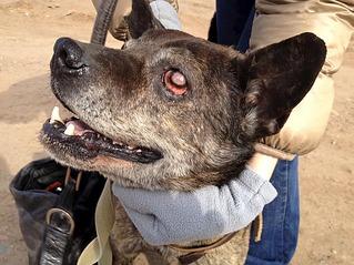 1101 X 826 126.2 Kb Боря, 17 лет - сбитая собака, Авангардная, скорее всего не будет видеть