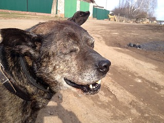 1101 X 826 118.0 Kb 1101 X 826 126.2 Kb Боря, 17 лет - сбитая собака, Авангардная, скорее всего не будет видеть
