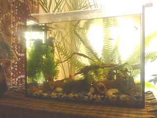1600 X 1200 663.1 Kb Как запустить аквариум?