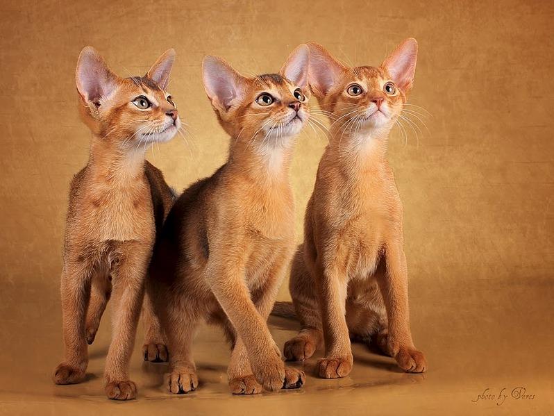 1016 X 763 139.3 Kb 1017 X 763 132.4 Kb Веточка для Коржиков. У нас родились абиссинские котята и щенки пемброка