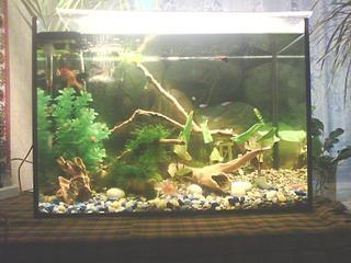 1600 X 1200 723.7 Kb Как запустить аквариум?