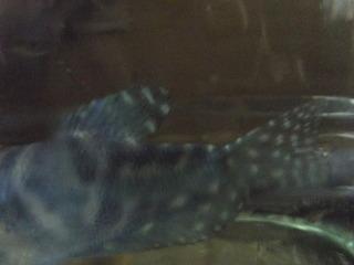 1920 X 1440 616.3 Kb только рыбы