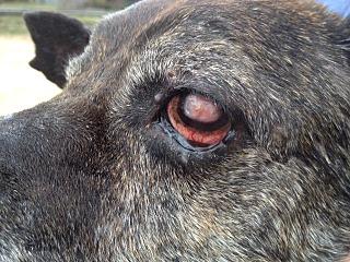 640 X 480 183.6 Kb Боря, 17 лет - сбитая собака, Авангардная, скорее всего не будет видеть