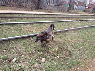 1632 X 1224 1014.0 Kb Боря, 17 лет - сбитая собака, Авангардная, скорее всего не будет видеть