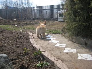 1920 X 1440 1008.3 Kb Веточка для Коржиков. У нас родились абиссинские котята и щенки пемброка