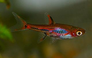 350 X 221 60.8 Kb только рыбы