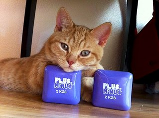 604 X 451  54.3 Kb 604 X 451  48.9 Kb Британцы Ричард - Чемпион Мира WCF и Лекси Международный чемпион. У нас есть котятки.