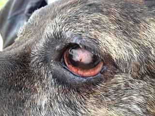 1632 X 1224 1004.1 Kb Боря, сбитая собака, Авангардная, скорее всего не будет видеть
