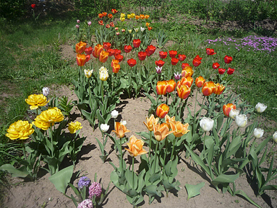 979 X 734 520.8 Kb 979 X 734 525.7 Kb Тюльпаны, нарциссы, ирисы, крокусы - все весенние луковичные