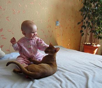1920 X 1654 832.0 Kb 1920 X 1220 641.0 Kb Веточка для Коржиков. У нас родились абиссинские котята и щенки пемброка