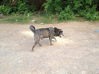 1632 X 1224 776.7 Kb Боря, сбитая собака, Авангардная, скорее всего не будет видеть