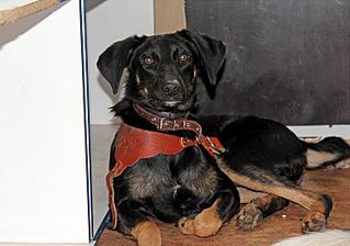 1500 X 1051 282.7 Kb Передержка для животных Пес Барбос отдает животных и принимает кошек на лето!