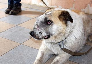 1500 X 1051 309.6 Kb 1500 X 1051 337.1 Kb Передержка для животных Пес Барбос отдает животных и принимает кошек на лето!