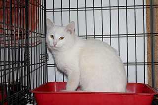 1920 X 1280 135.7 Kb Передержка для животных Пес Барбос отдает животных и принимает кошек на лето!