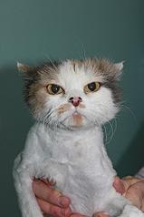 333 X 500 36.2 Kb Передержка для животных Пес Барбос отдает животных и принимает кошек на лето!
