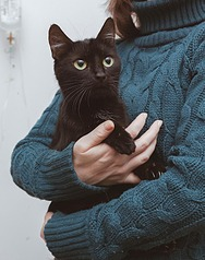 1181 X 1500 239.2 Kb 1200 X 945 78.4 Kb Передержка для животных Пес Барбос отдает животных и принимает кошек на лето!