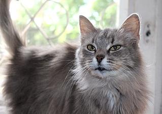 1500 X 1051 246.4 Kb Передержка для животных Пес Барбос отдает животных и принимает кошек на лето!