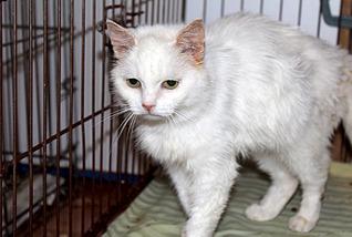 1795 X 1205 307.2 Kb 1500 X 1051 246.4 Kb Передержка для животных Пес Барбос отдает животных и принимает кошек на лето!