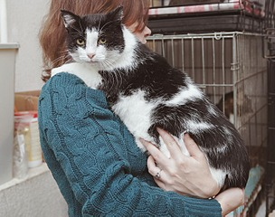 1500 X 1181 300.6 Kb Передержка для животных Пес Барбос отдает животных и принимает кошек на лето!