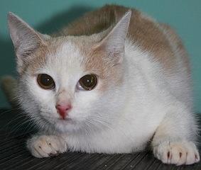 500 X 424 56.7 Kb Передержка для животных Пес Барбос отдает животных и принимает кошек на лето!